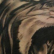 Татуировка мужская Black&Grey на плече лев