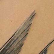 Татуировка женская Black&Grey на лопатке птицы
