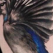Татуировка женская графика на предплечье птицы