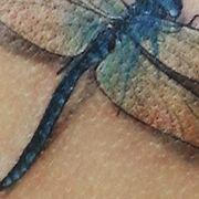 Татуировка женская реализм на лопатке стрекоза