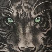 Татуировка мужская реализм на предплечье тигр