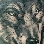 Татуировка мужская реализм на предплечье волк